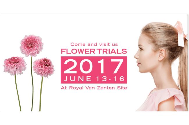 Flower trials 2017
