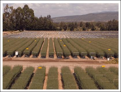Beauty Line farm, Kenya is established