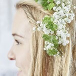 Gypsophila Beauty Bride