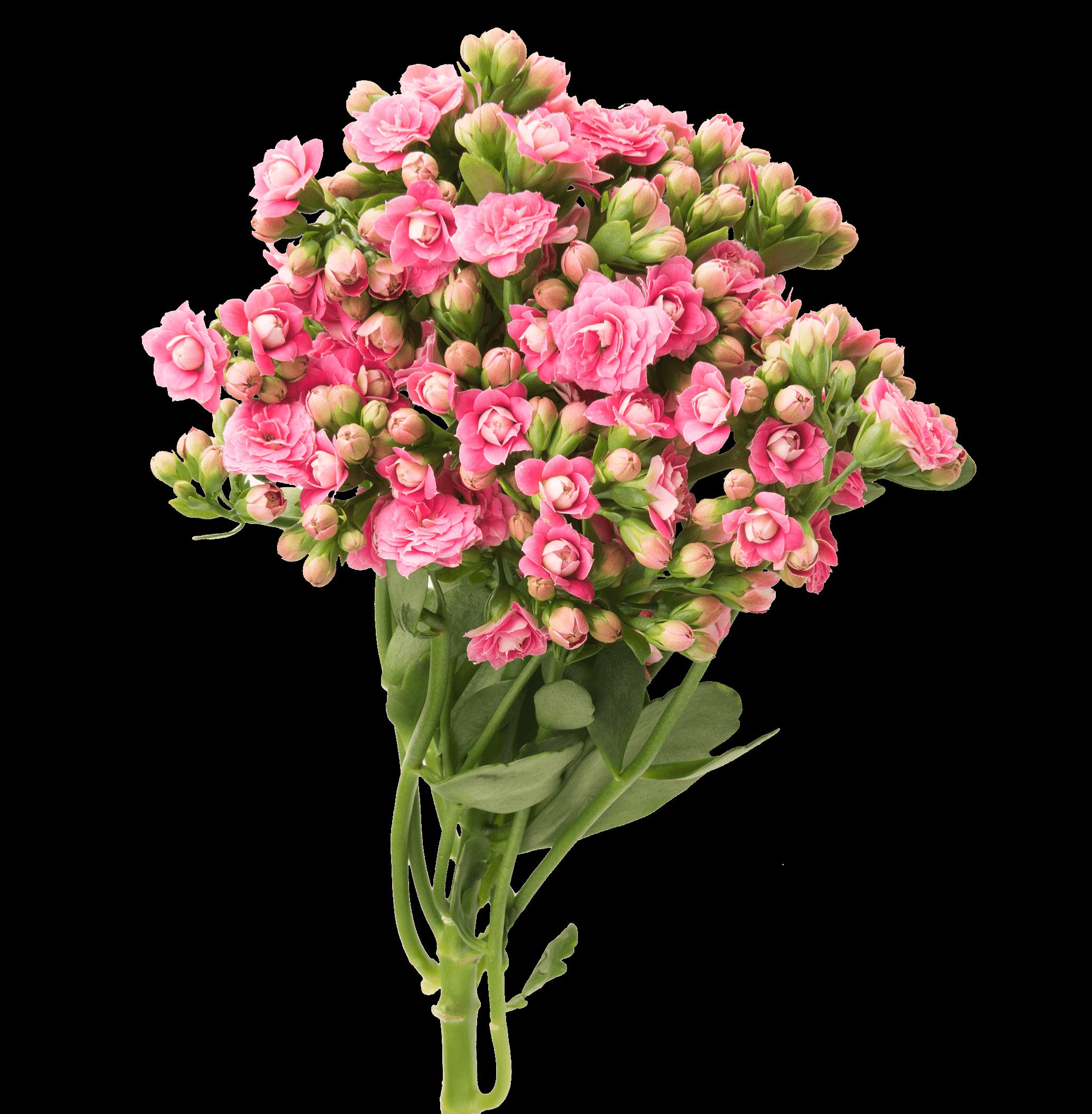 Kalanchoe Cutflowers Pink Danziger