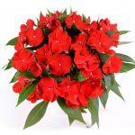 HARMONY® Bold Red