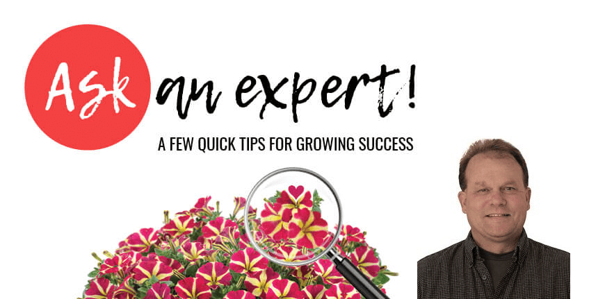 Petunia Growing Tips