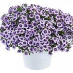 EYECONIC™ Purple