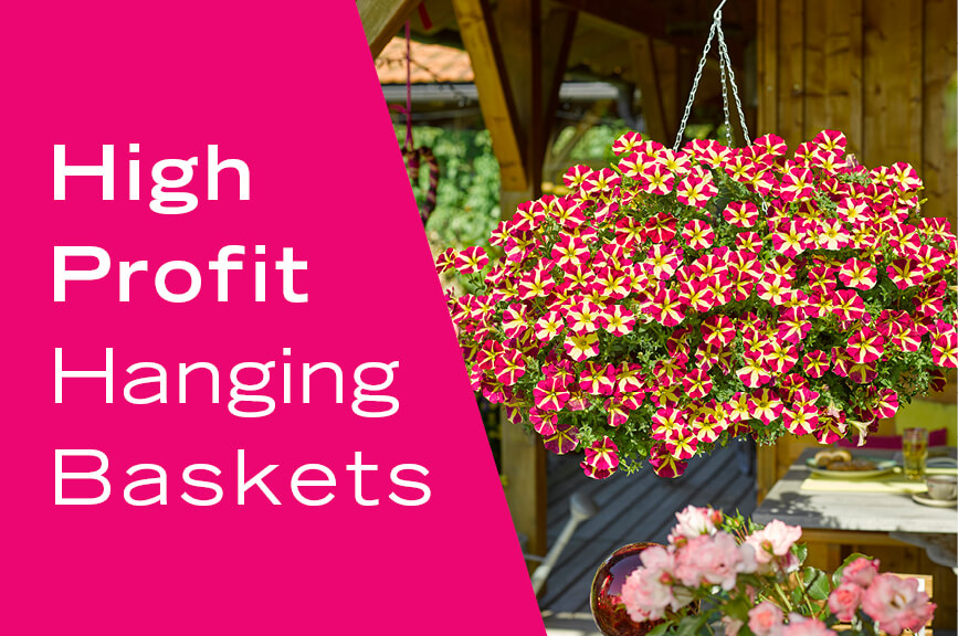 high profit hanging basket annuals